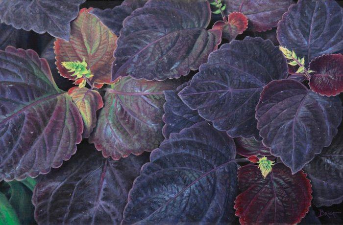 Harmonie en violets